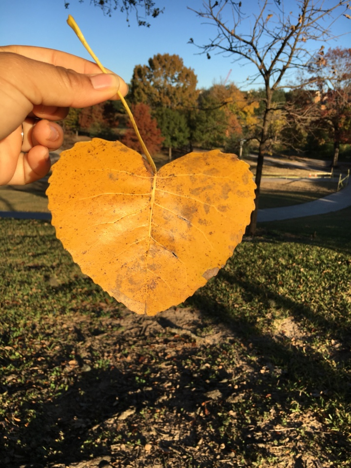Allow self-love to saveyou